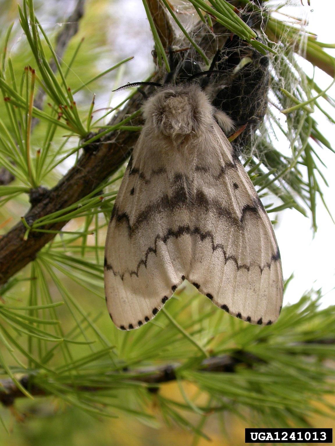 насекомые-вредители леса фото